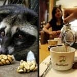 Coffee Alamid: From Cat Poop to World's Finest
