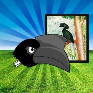 sulu hornbill pinoy angry birds