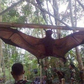 giant bat philippines hoax - Copy