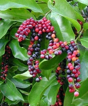 7 Philippine Fruits You Probably Don't Know