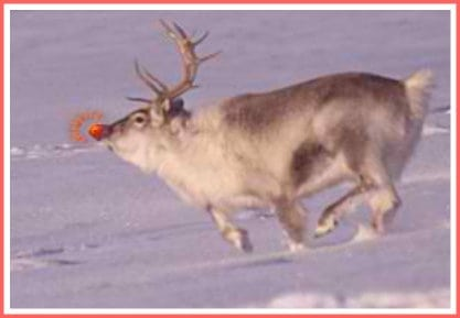 Rudolph the red nosed reindeer + why does rudolph have a red nose