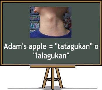 Filipino translaion of Adam's apple or windpipe