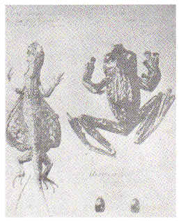 animals collected by Rizal