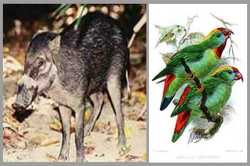 cebu warty pig and cebu hanging parrots + extinct animals