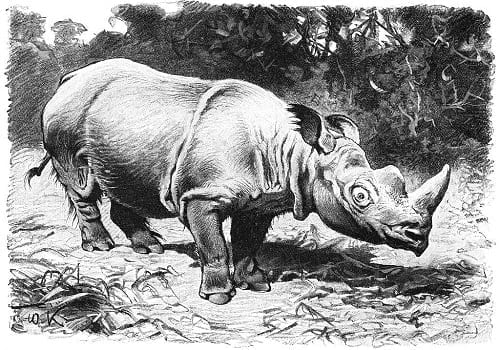 Rhinoceros in the Philippines