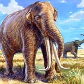 prehistoric animals in the Philippines