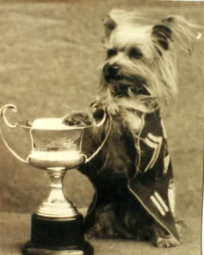 Smoky winning best Mascot in the Southwest Pacific Theater