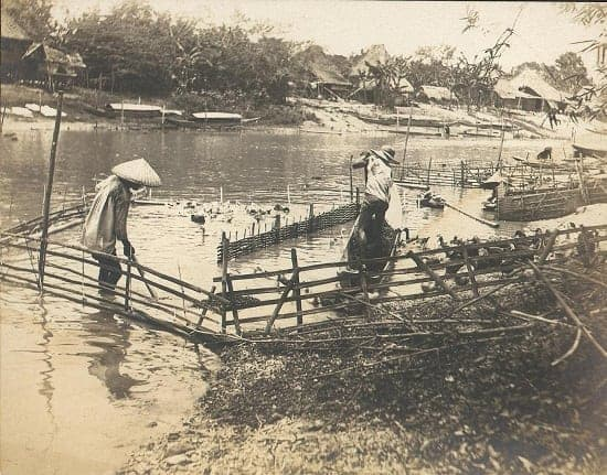 Duck farm in Pasig River